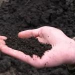 Доставка плодородного грунта от компании http://zlotnikoffstroy.ru